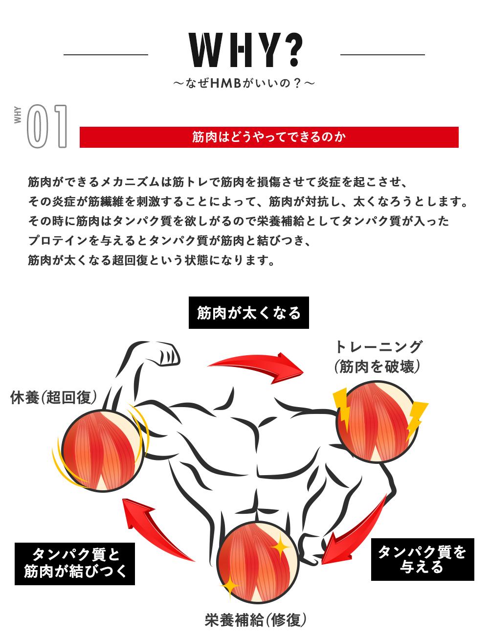 〜なぜHMBがいいの?〜WHY01:筋肉はどうやってできるのか。筋肉ができるメカニズムは筋トレで筋肉を損傷させて炎症を起こさせ、その炎症が筋繊維を刺激することによって、筋肉が対抗し、太くなろうとします。その時に筋肉はタンパク質を欲しがるので栄養補給としてタンパク質が入ったプロテインを与えるとタンパク質が筋肉と結びつき、筋肉が太くなる超回復という状態になります。